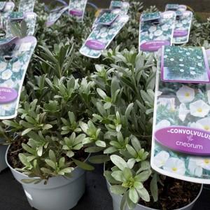 Garden Hardy Plants