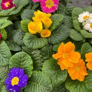 Seasonal Plants & Bulbs