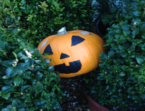 FREE Pumpkin Hunt…