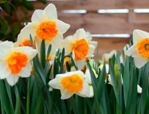 15  Gardening Tips for February