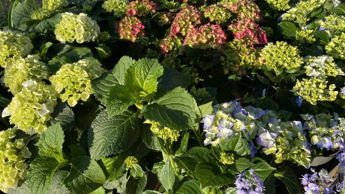 Showcase - Garden Hardy Plants - Barn Farm Plants Garden ...
