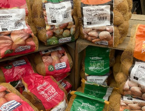 Seed Potatoes are in…