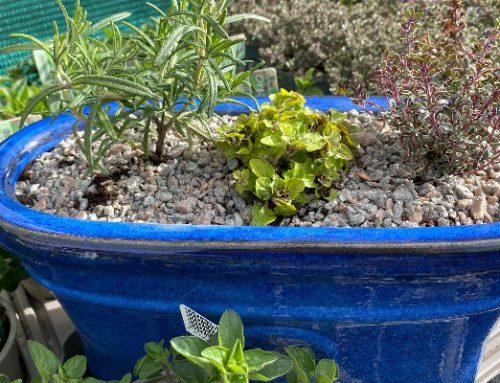 Herb Garden…