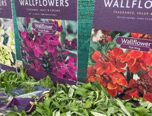 Wallflowers…